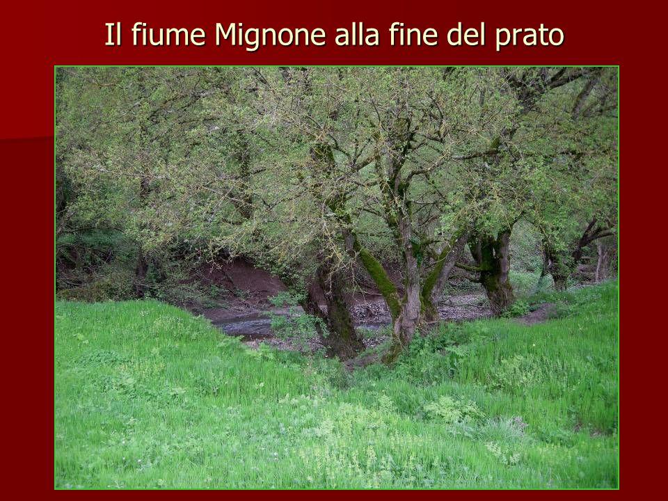 Il fiume Mignone alla fine del prato