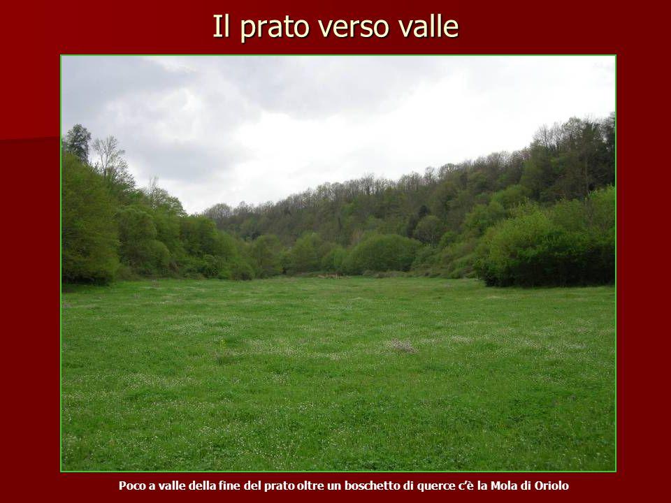 Il prato verso valle Poco a valle della fine del prato oltre un boschetto di querce c'è la Mola di Oriolo.