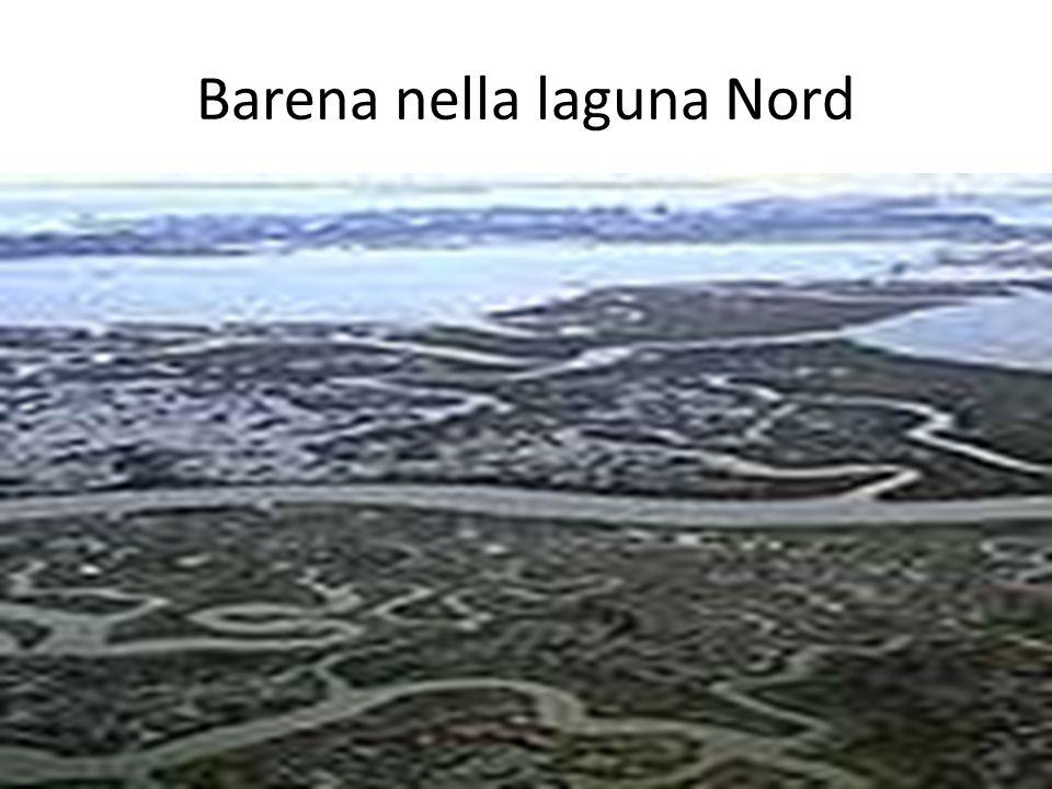 Barena nella laguna Nord