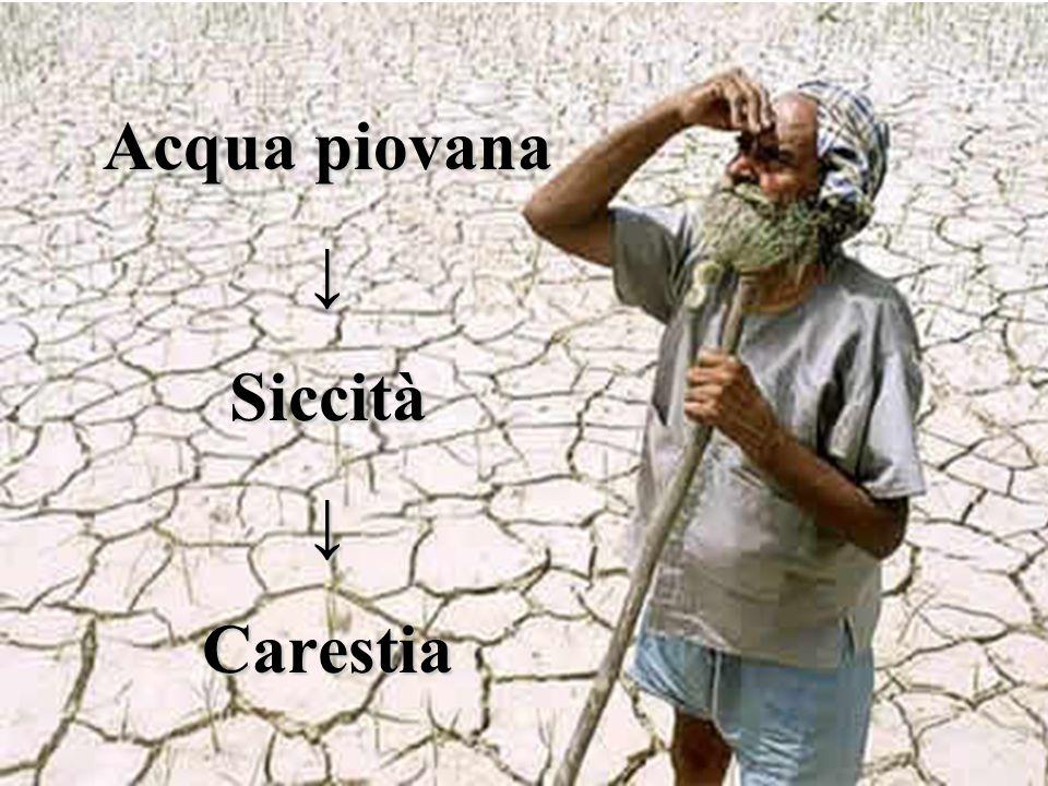 Acqua piovana ↓ Siccità Carestia