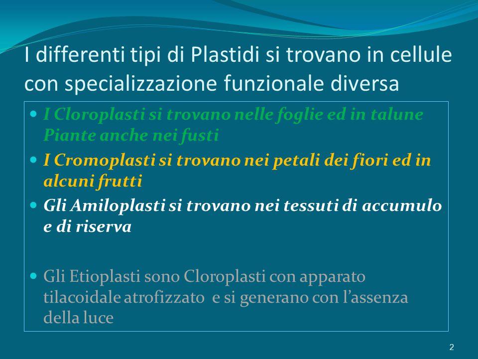 I differenti tipi di Plastidi si trovano in cellule con specializzazione funzionale diversa