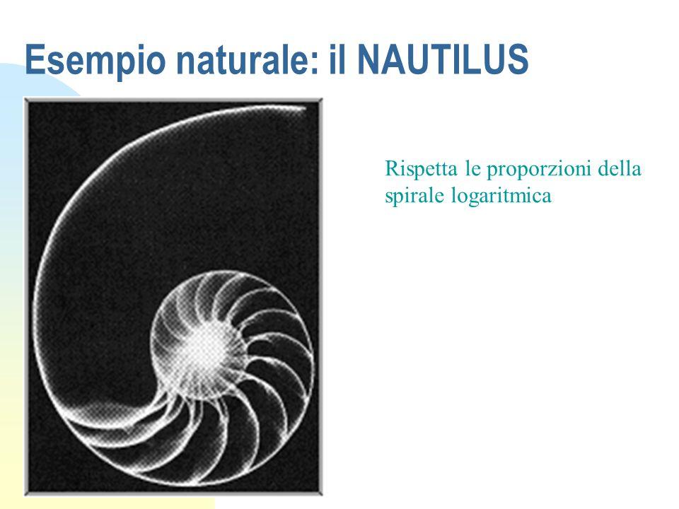 Esempio naturale: il NAUTILUS