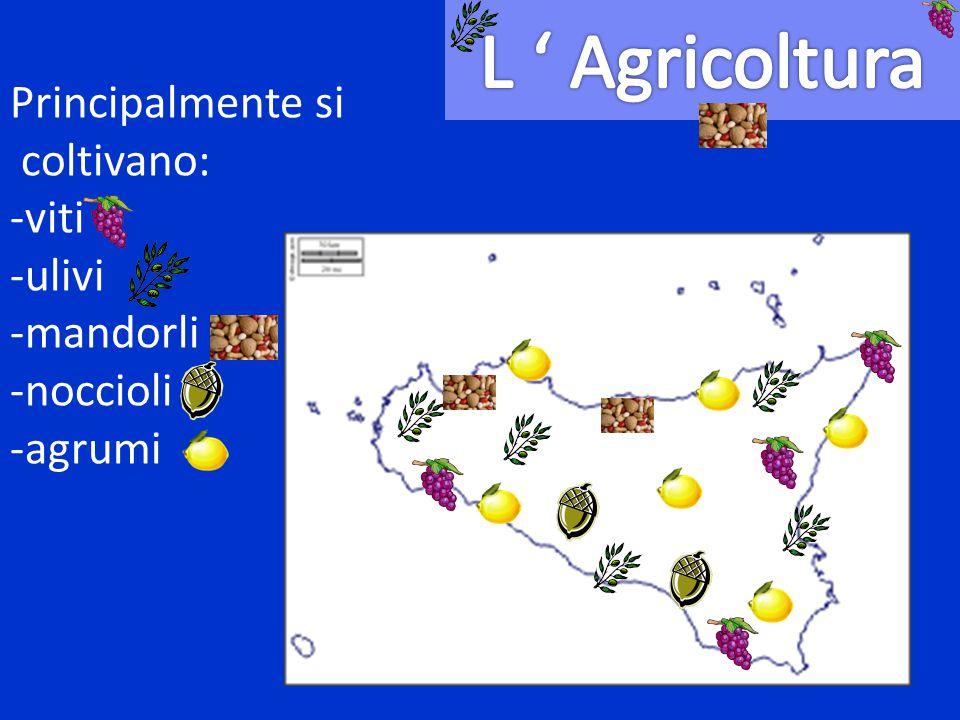 L ' Agricoltura Principalmente si coltivano: -viti -ulivi -mandorli