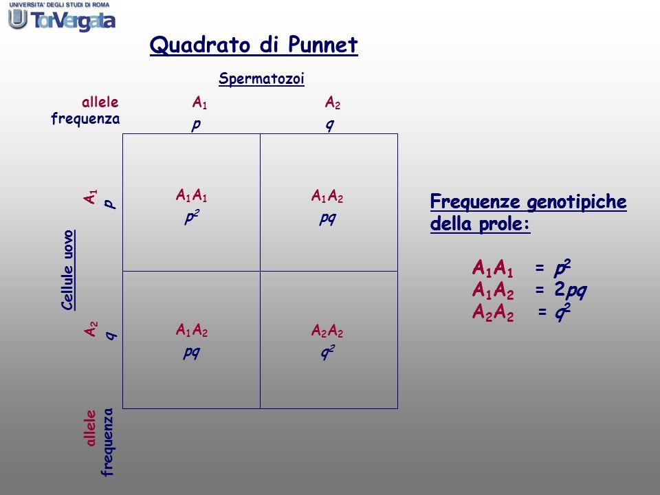 Quadrato di Punnet Frequenze genotipiche della prole: