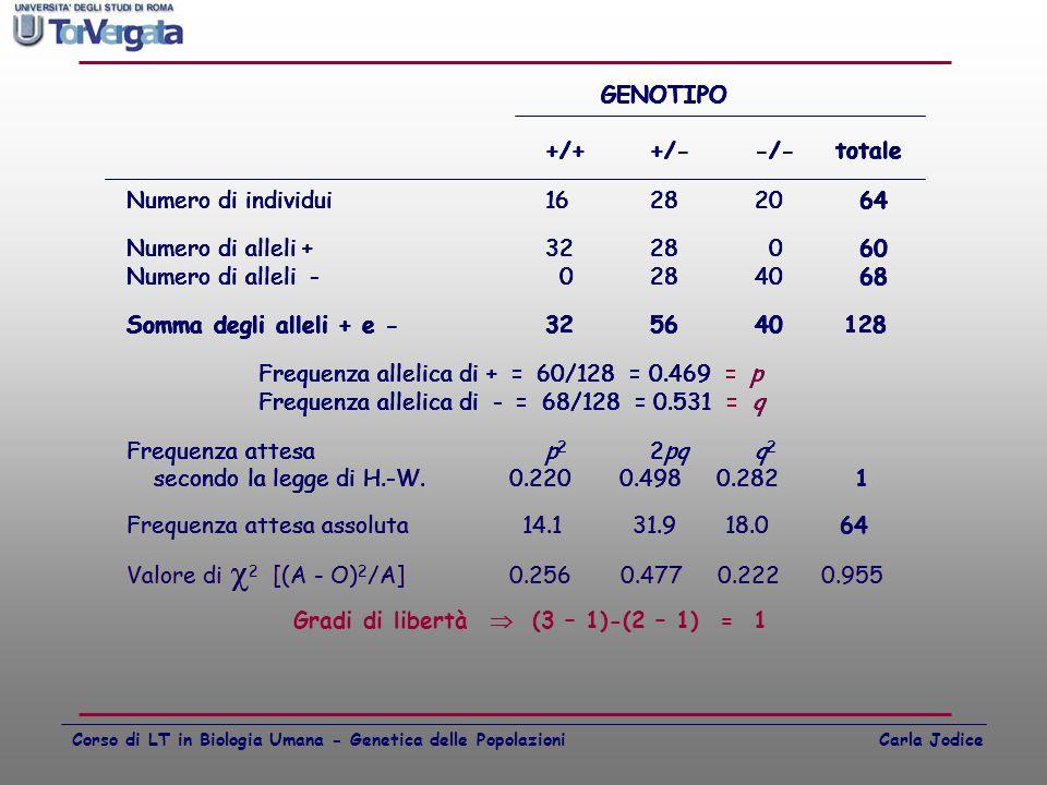 Frequenza allelica di + = 60/128 = 0.469