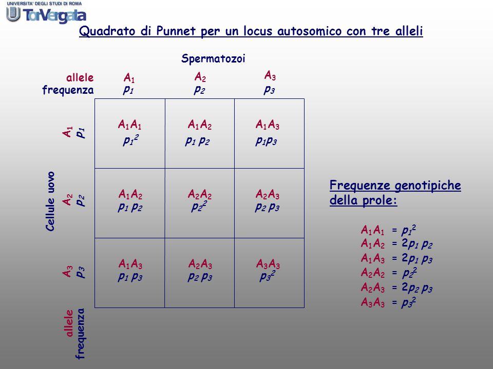 Quadrato di Punnet per un locus autosomico con tre alleli
