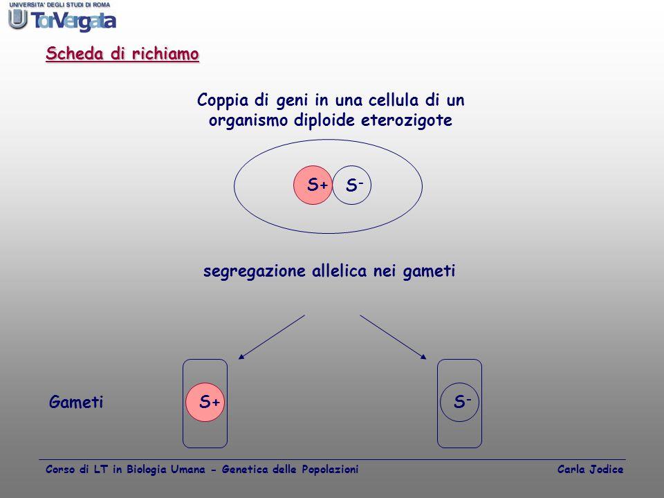 Coppia di geni in una cellula di un organismo diploide eterozigote