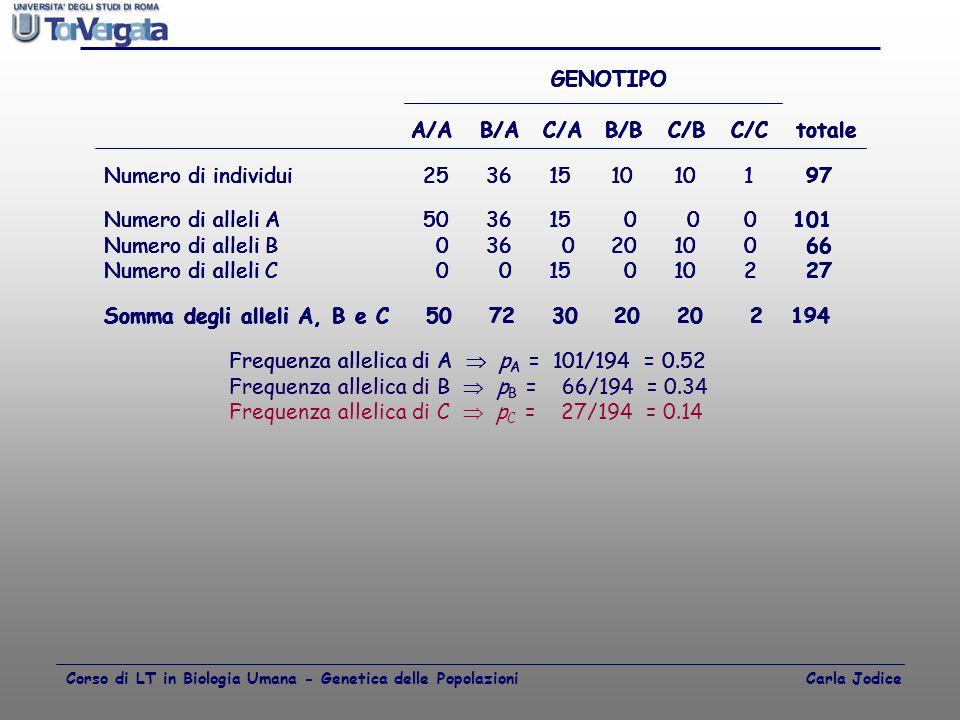 A/A B/A C/A B/B C/B C/C totale Numero di individui 25 36 15 10 10 1 97