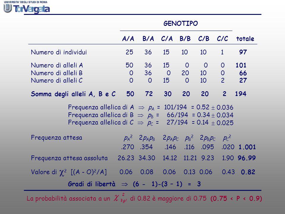 GENOTIPO A/A B/A C/A B/B C/B C/C totale. Numero di individui 25 36 15 10 10 1 97. Numero di alleli A 50 36 15 0 0 0 101.