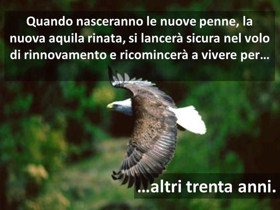 Quando nasceranno le nuove penne, la nuova aquila rinata, si lancerà sicura nel volo di rinnovamento e ricomincerà a vivere per…