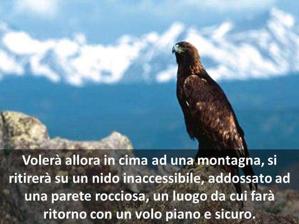 Volerà allora in cima ad una montagna, si ritirerà su un nido inaccessibile, addossato ad una parete rocciosa, un luogo da cui farà ritorno con un volo piano e sicuro.