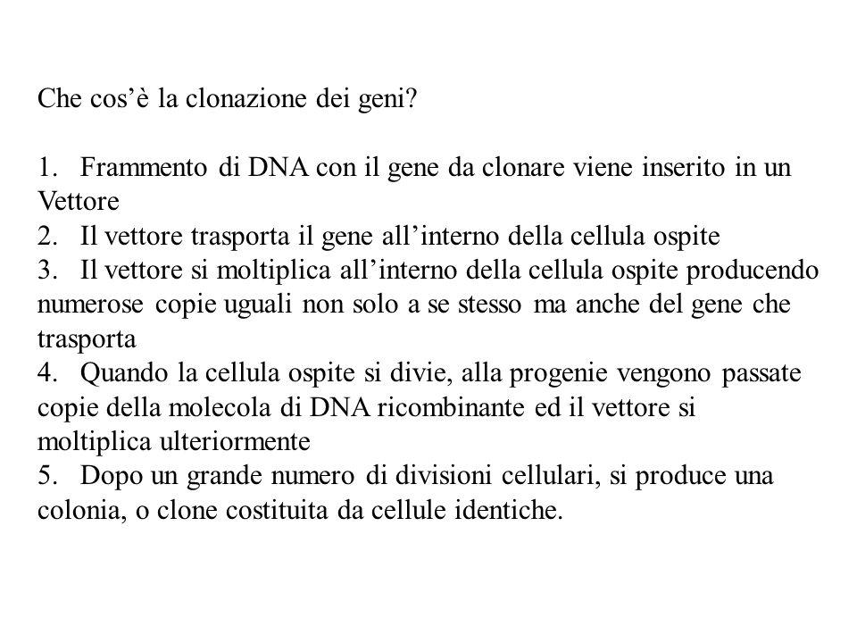 Che cos'è la clonazione dei geni