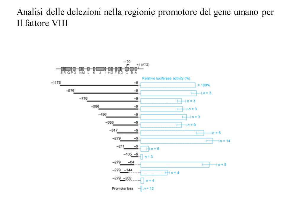 Analisi delle delezioni nella regionie promotore del gene umano per