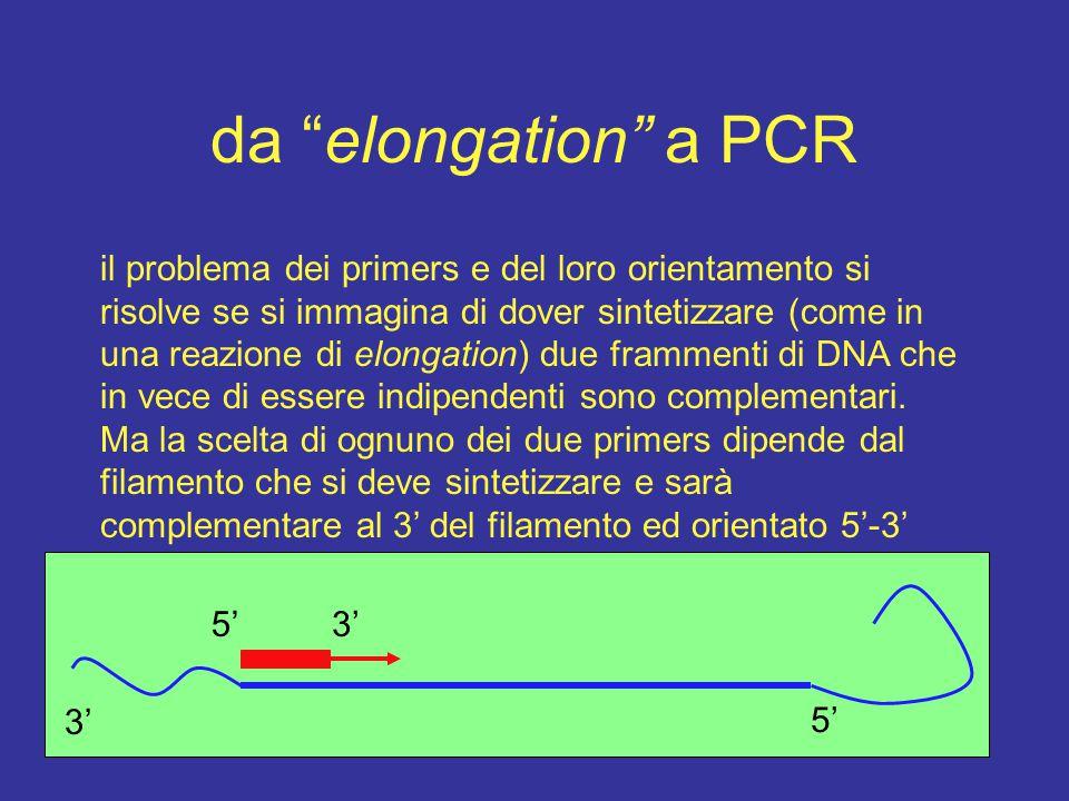 da elongation a PCR il problema dei primers e del loro orientamento si.