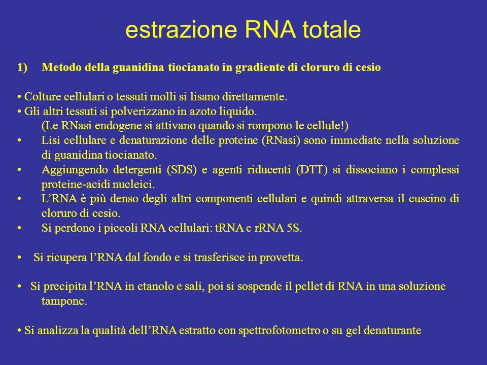 estrazione RNA totale Metodo della guanidina tiocianato in gradiente di cloruro di cesio.