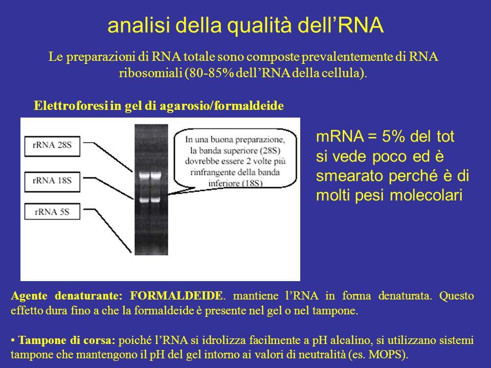 analisi della qualità dell'RNA