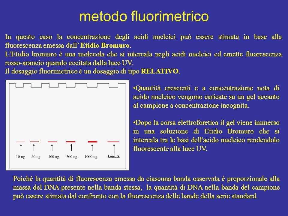 metodo fluorimetrico In questo caso la concentrazione degli acidi nucleici può essere stimata in base alla fluorescenza emessa dall' Etidio Bromuro.