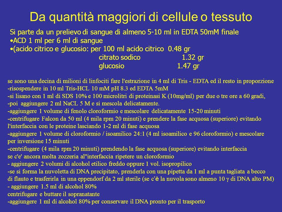 Da quantità maggiori di cellule o tessuto
