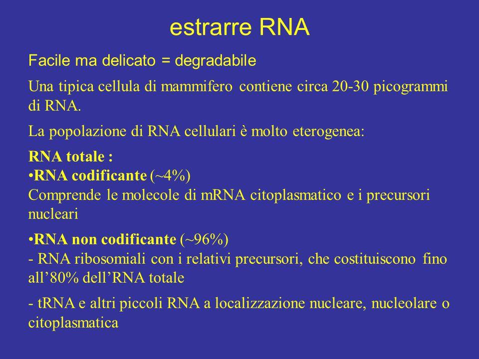estrarre RNA Facile ma delicato = degradabile