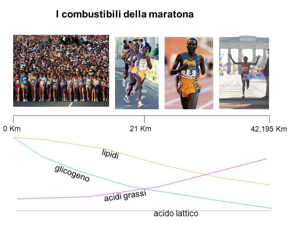 I combustibili della maratona