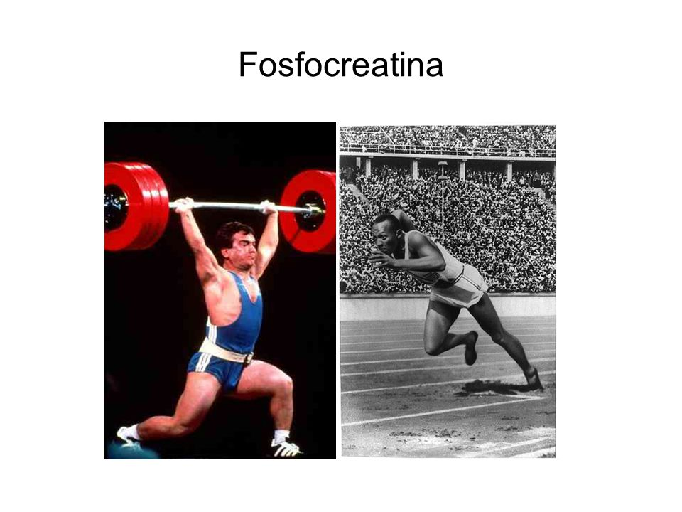 Fosfocreatina