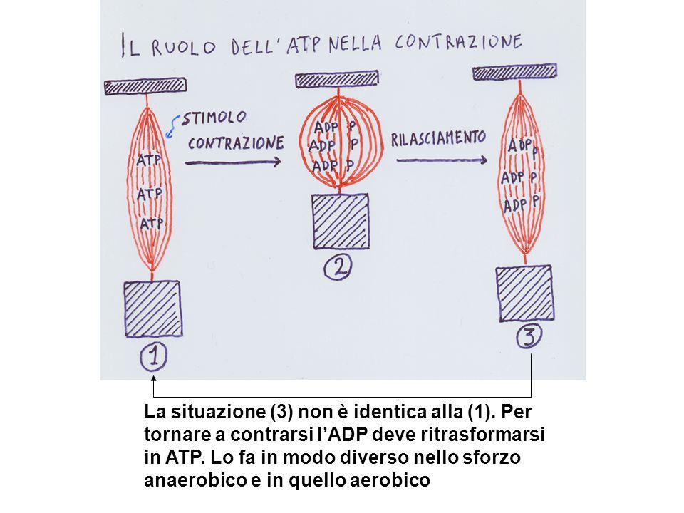 La situazione (3) non è identica alla (1)