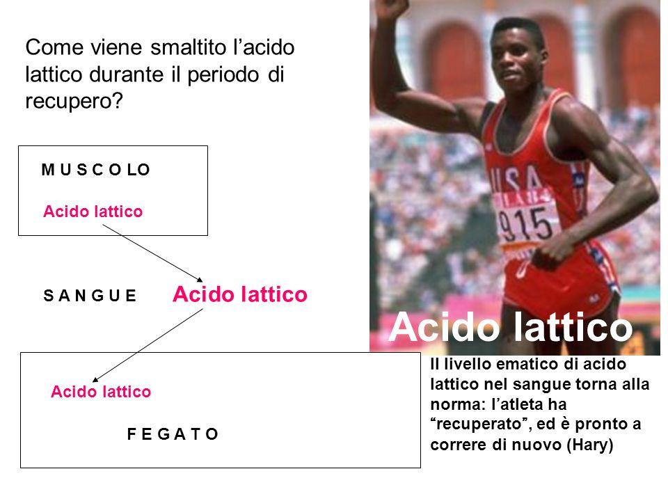 Acido lattico Come viene smaltito l'acido lattico durante il periodo di recupero Acido lattico. M U S C O LO.
