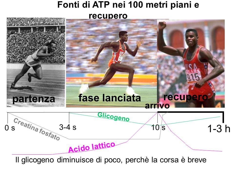 Fonti di ATP nei 100 metri piani e recupero
