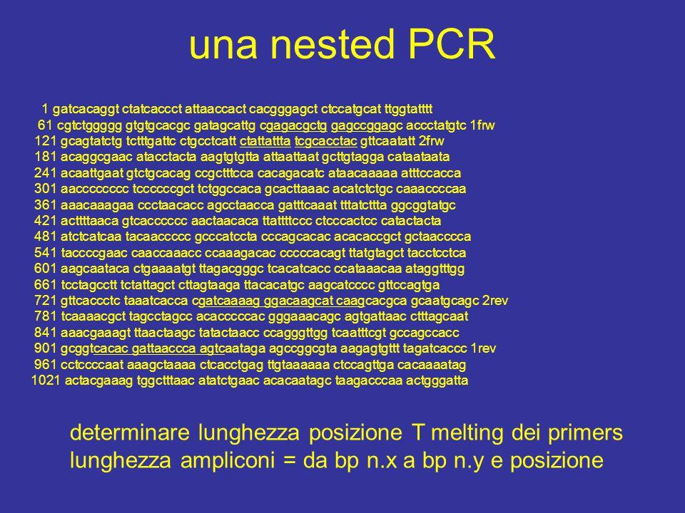 una nested PCR determinare lunghezza posizione T melting dei primers