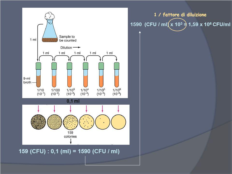 1 / fattore di diluizione