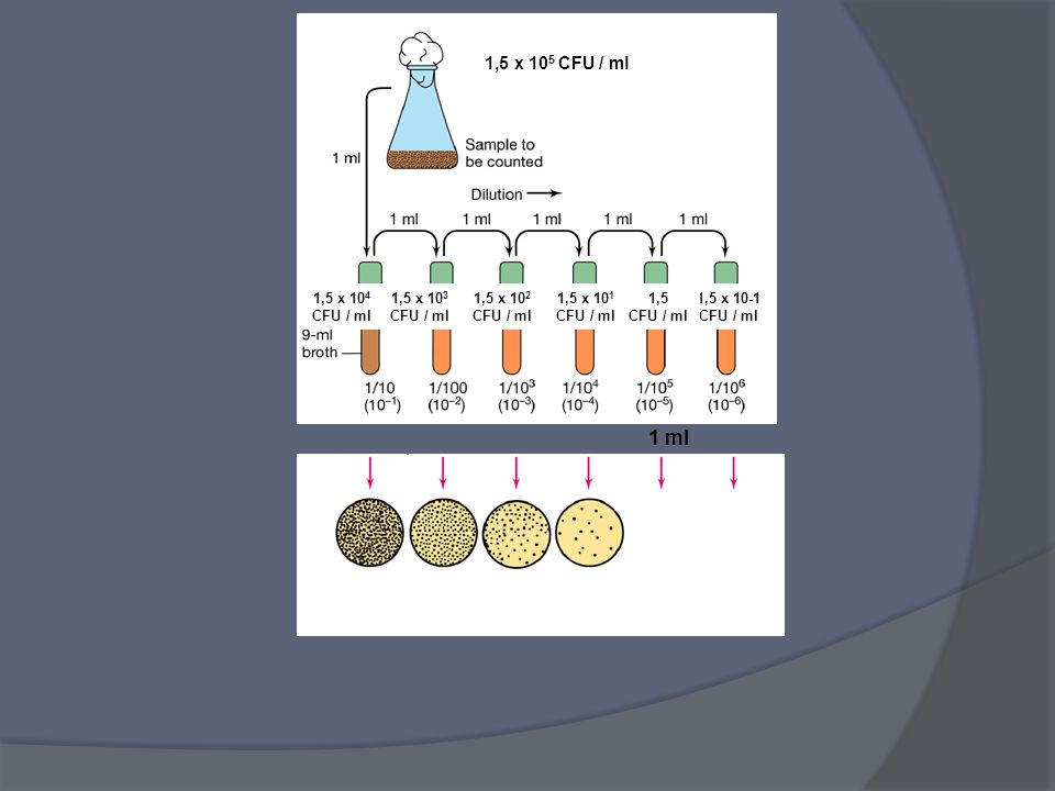 1,5 x 105 CFU / ml 1 ml 1,5 x 105 CFU / ml 1 o 2 colonie