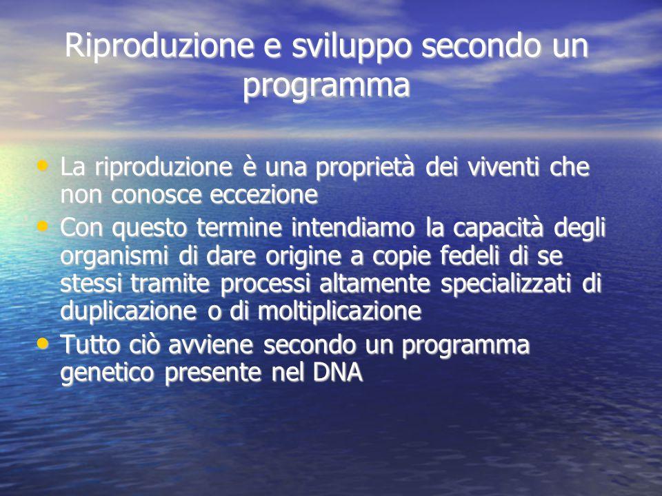 Riproduzione e sviluppo secondo un programma