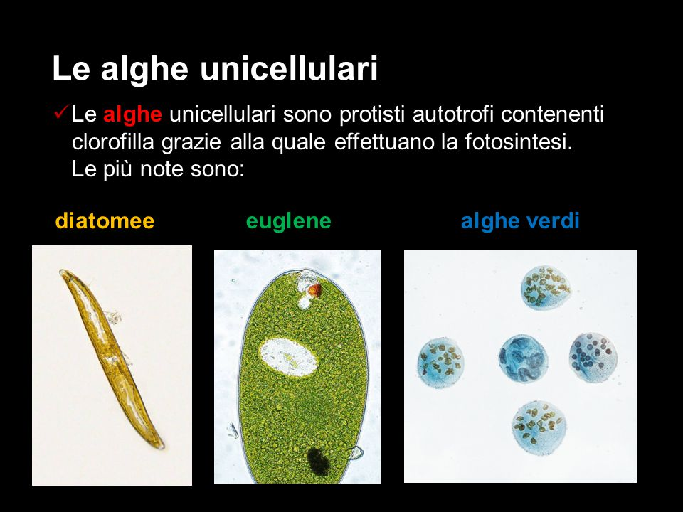 Le alghe unicellulari