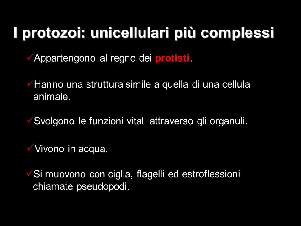 I protozoi: unicellulari più complessi