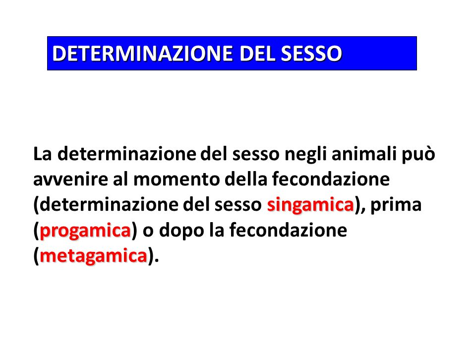 DETERMINAZIONE DEL SESSO