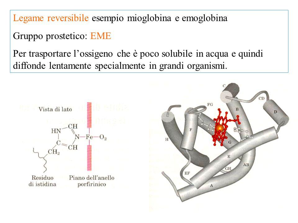 Legame reversibile esempio mioglobina e emoglobina