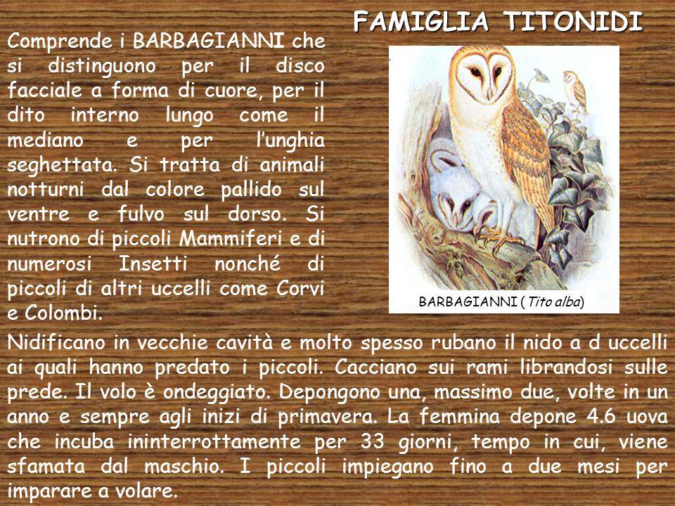 FAMIGLIA TITONIDI