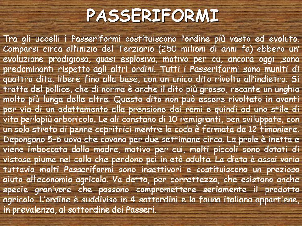 PASSERIFORMI