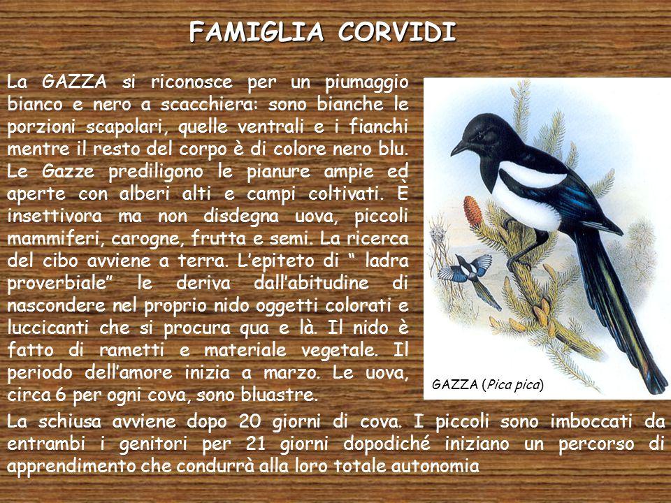 FAMIGLIA CORVIDI