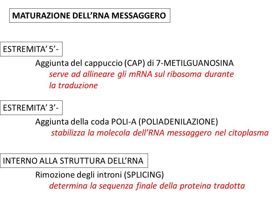 MATURAZIONE DELL'RNA MESSAGGERO
