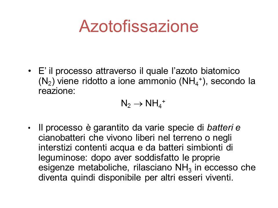 Azotofissazione E' il processo attraverso il quale l'azoto biatomico (N2) viene ridotto a ione ammonio (NH4+), secondo la reazione: