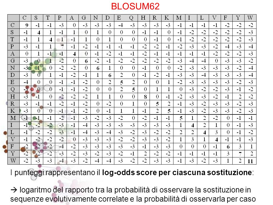 BLOSUM62 Substitution Matrix