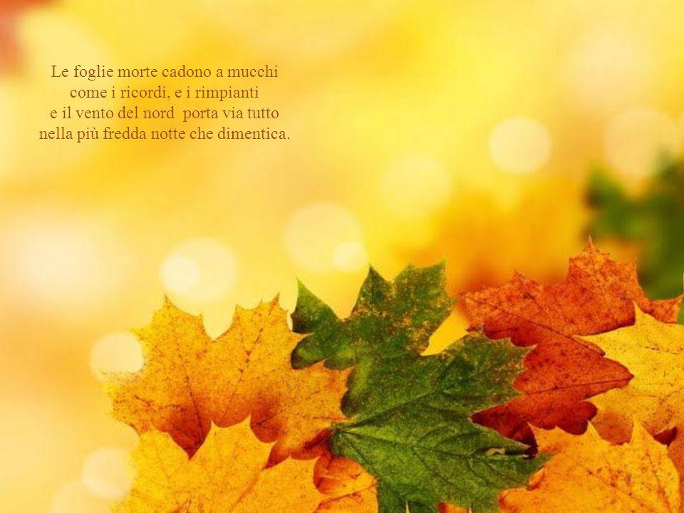 Le foglie morte cadono a mucchi come i ricordi, e i rimpianti