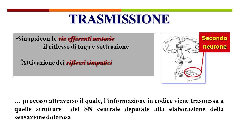TRASMISSIONE sinapsi con le vie efferenti motorie. - il riflesso di fuga e sottrazione. Attivazione dei riflessi simpatici.