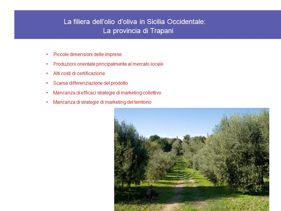 La filiera dell'olio d'oliva in Sicilia Occidentale: