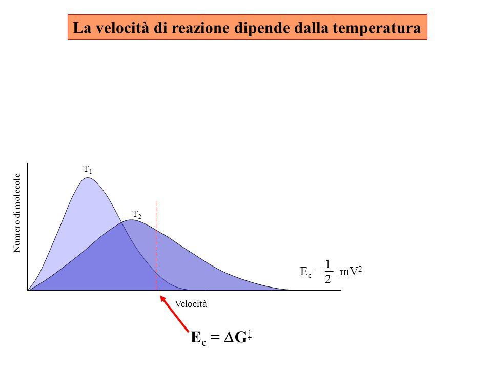 La velocità di reazione dipende dalla temperatura