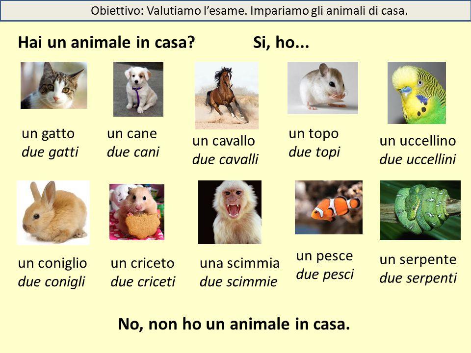 Obiettivo: Valutiamo l'esame. Impariamo gli animali di casa.
