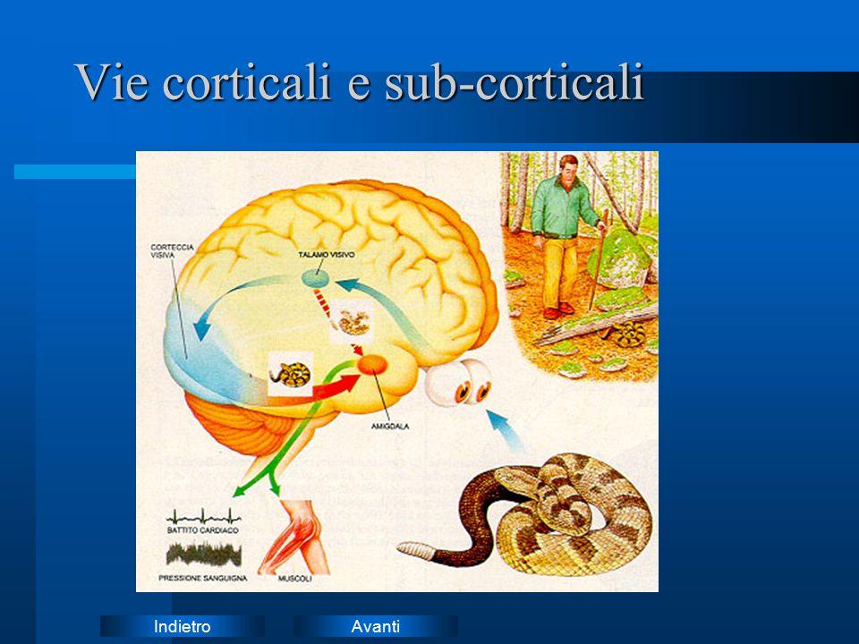 Vie corticali e sub-corticali