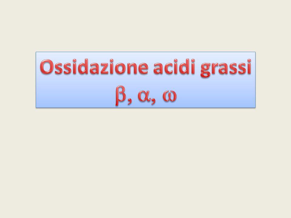 Ossidazione acidi grassi