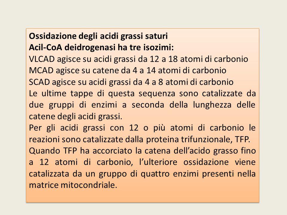 Ossidazione degli acidi grassi saturi